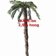 Palmboom huren